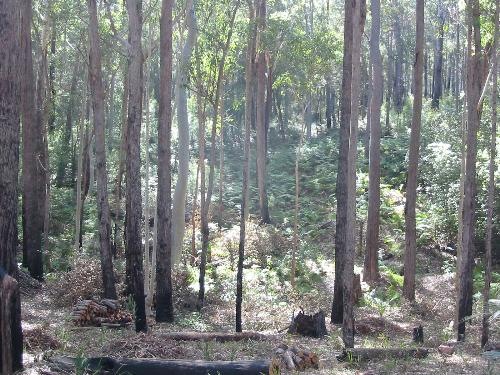 Property For Sold Batemans Bay 2536 NSW 4