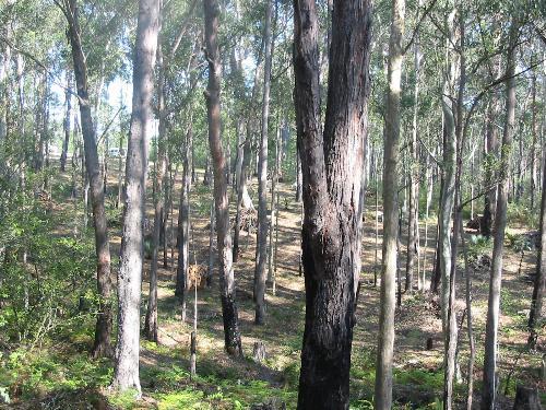 Property For Sold Batemans Bay 2536 NSW 6