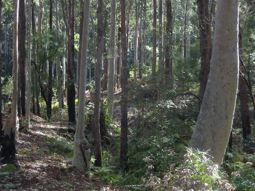 Property For Sold Batemans Bay 2536 NSW 11