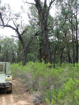 Property For Sold Gilgandra 2827 NSW 3