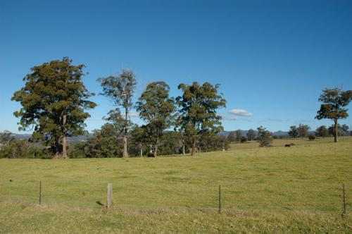 Property For Sold 116 Mollydale Road Tyringham NSW 2453 10
