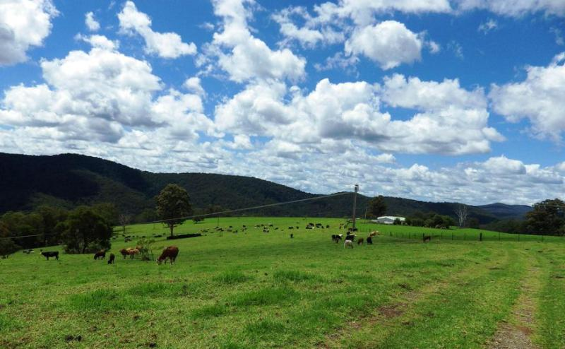 Property For Sold 116 Mollydale Road Tyringham NSW 2453 13