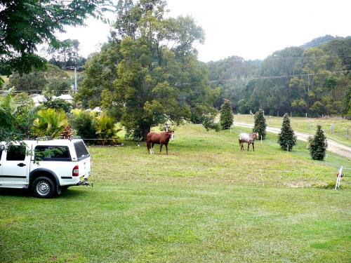 Property For Sold Murwillumbah 2484 NSW 2
