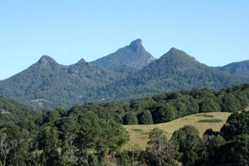 Property For Sold Murwillumbah 2484 NSW 8