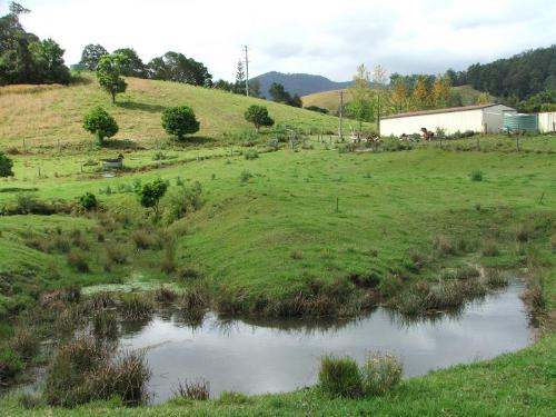 Property For Sold 3901 Taylors Arm Road Burrapine NSW 2447 10