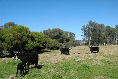 Property For Sold Tumut 2720 NSW 3