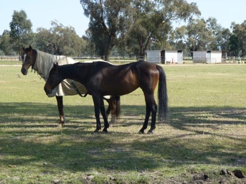 Property For Sale Wagga Wagga 2650 NSW 10