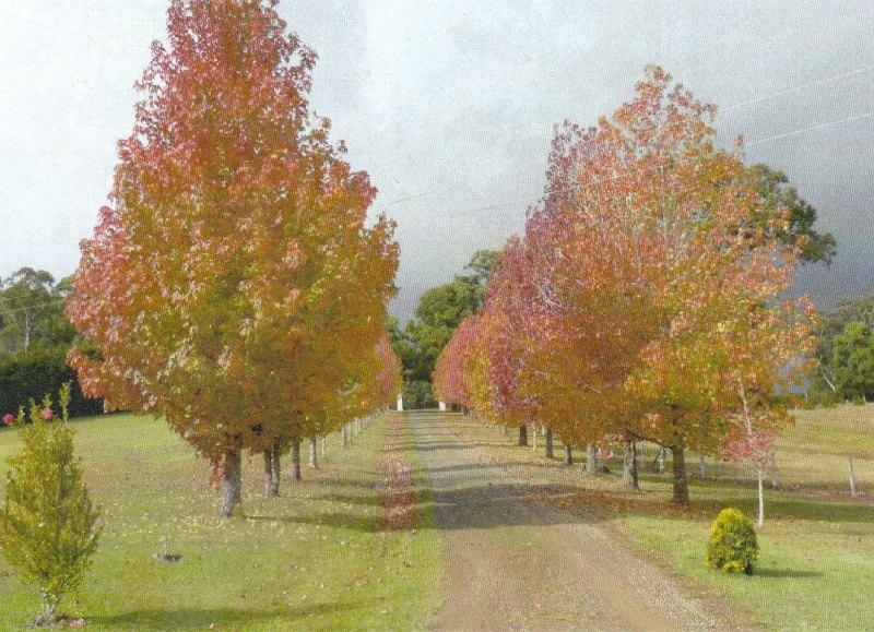 Property For Sale Rainbow Flat 2430 NSW 4
