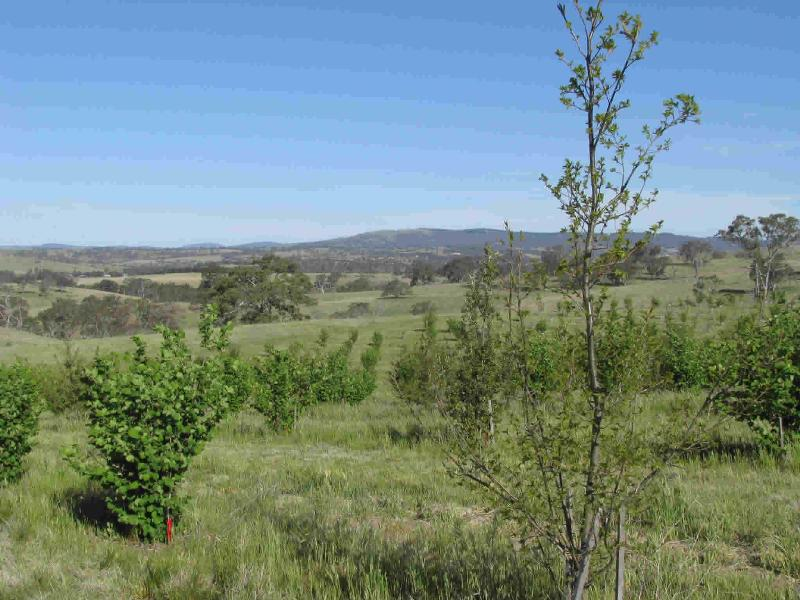Property For Sold Oconnell 2795 NSW 7