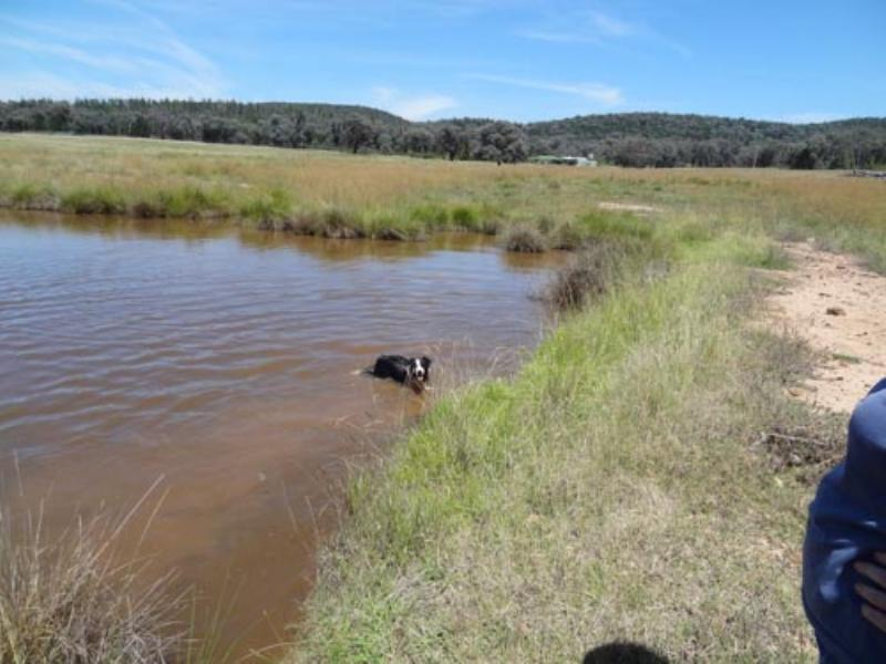 Property For Sold Cowra 2794 NSW 8