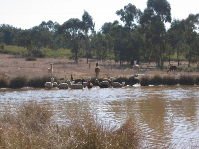 Property For Sold Cowra 2794 NSW 9