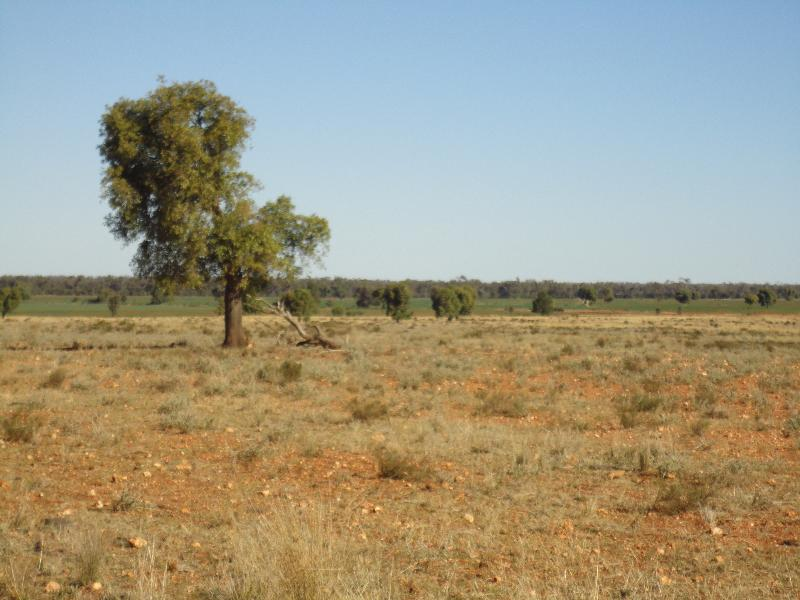 Property For Sale Nyngan 2825 NSW 2