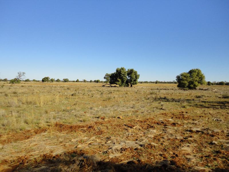 Property For Sale Nyngan 2825 NSW 8
