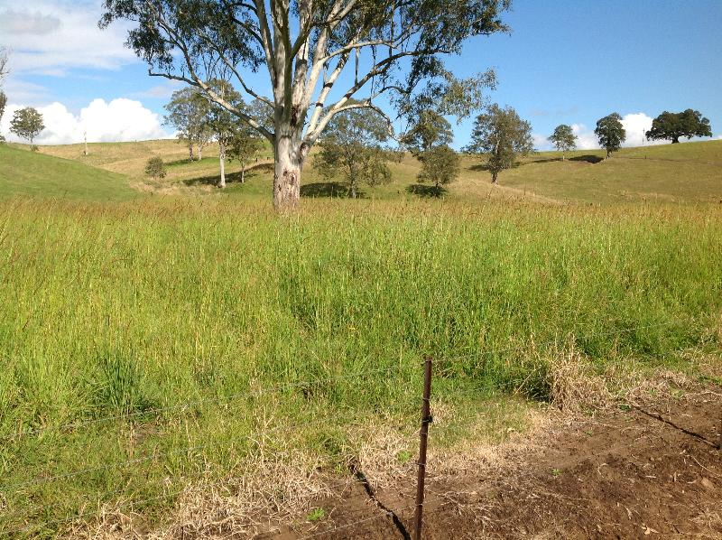 Property For Sold Kyogle 2474 NSW 11