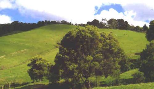Property For Sold Stony Creek 3957 VIC 12