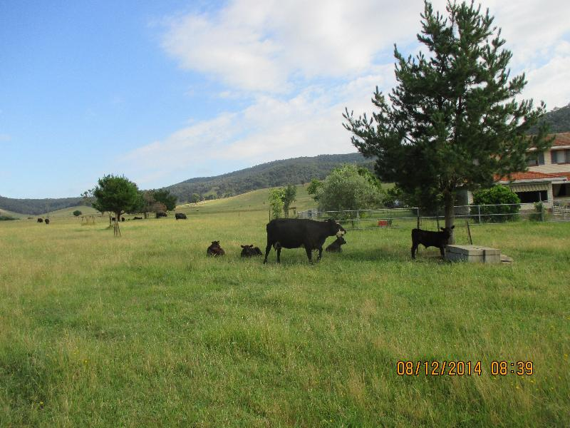 Property For Sale 12 Alpine Way Khancoban NSW 2642 7