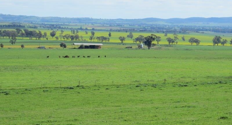Property For Sold Canowindra 2804 NSW 7