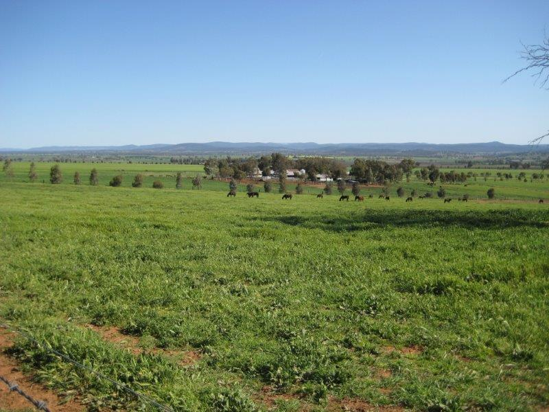 Property For Sold Canowindra 2804 NSW 18