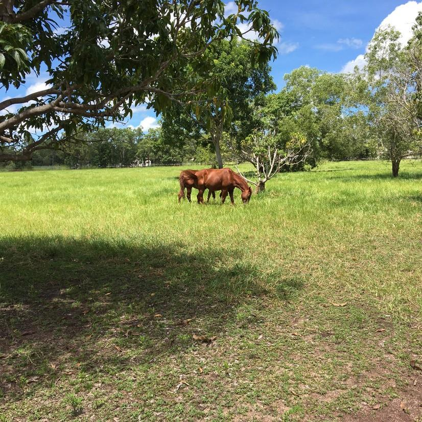 Property For Sale Lot 5111/79 Freds Pass Road Humpty Doo NT 0836 6