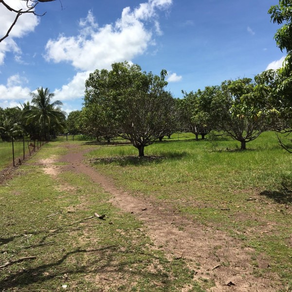 Property For Sale Lot 5111/79 Freds Pass Road Humpty Doo NT 0836 8