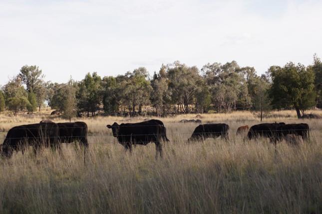 Atholwood 2361 NSW