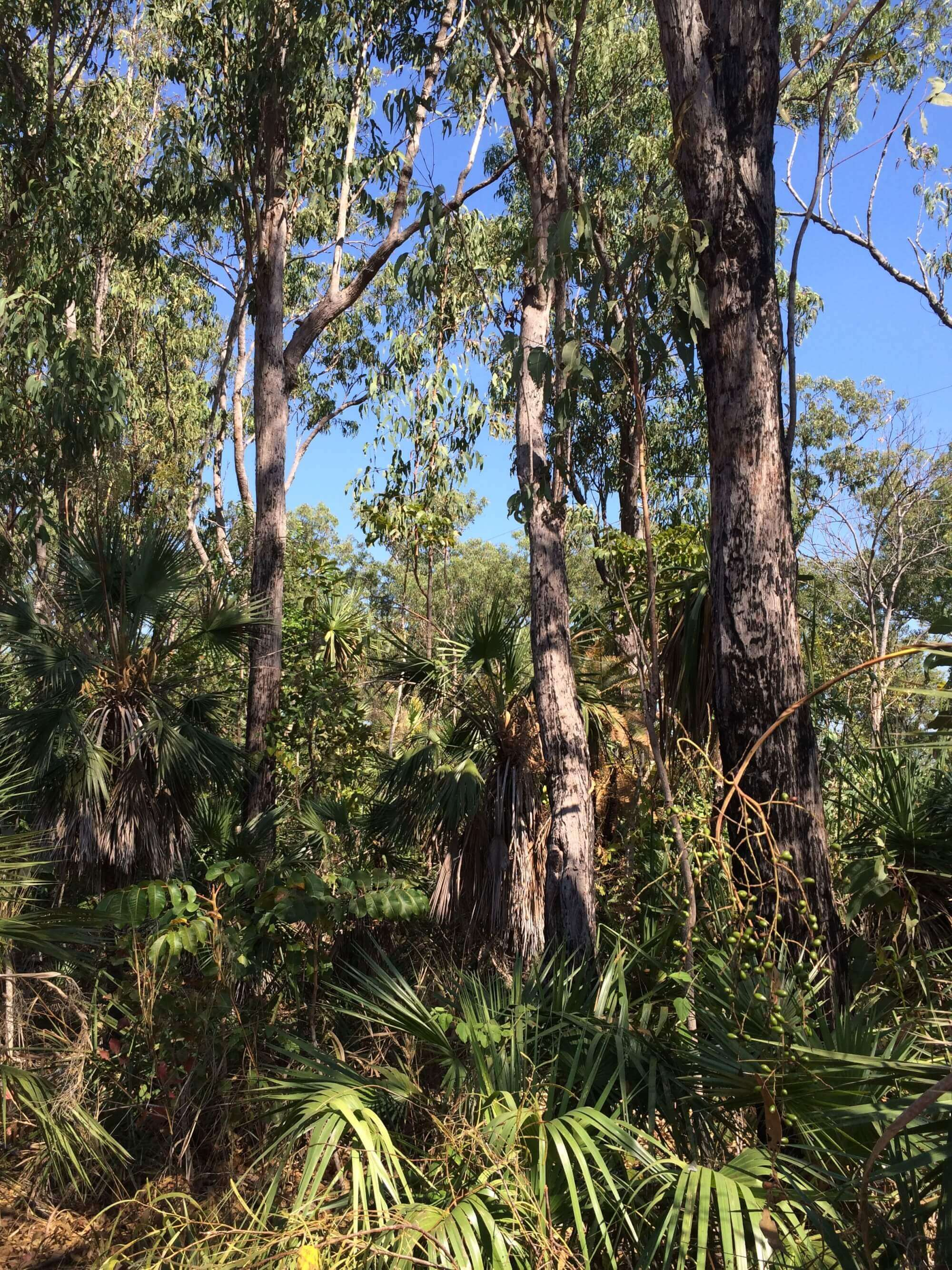 Property For Sale 6083/139 Eucalyptus Road Herbert NT 0836 2