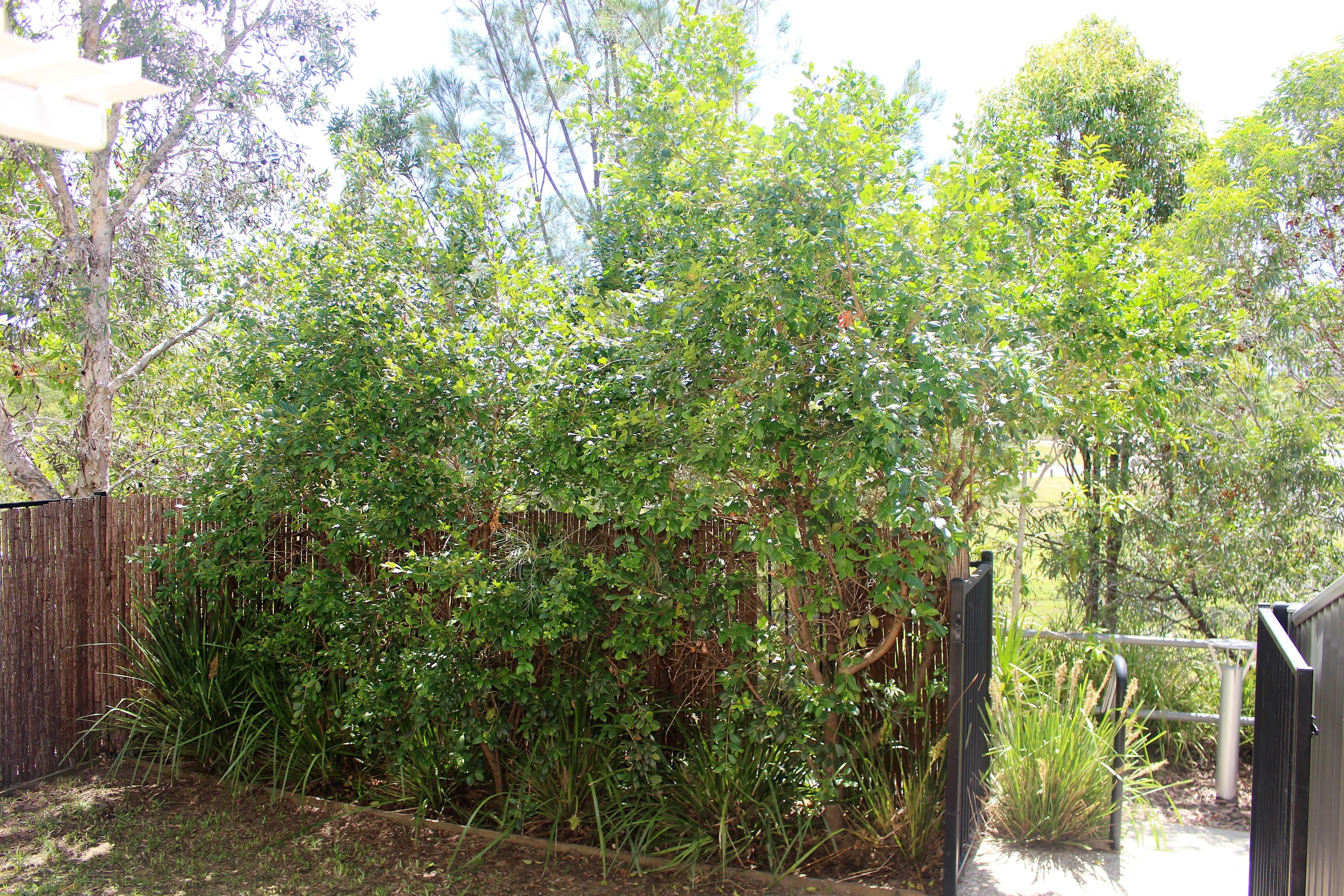Property For Sale 54/115 Mango Hill Boulevard East Mango Hill QLD 4509 13