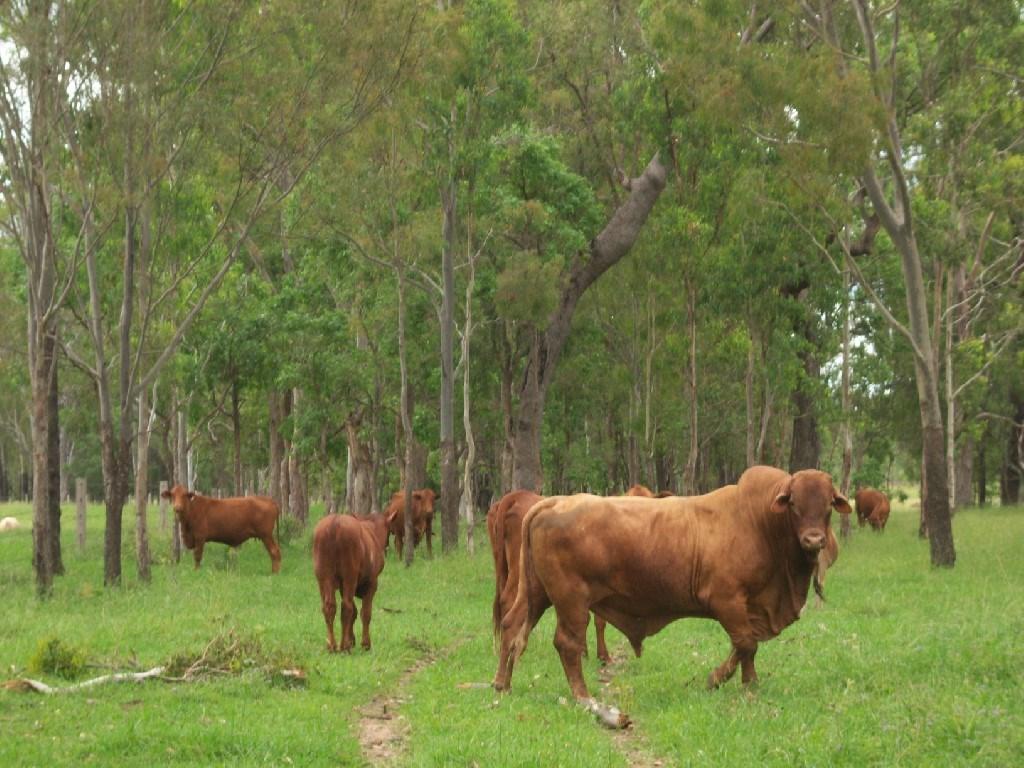 Off Mount Woowoonga Road, Via Biggenden Woowoonga QLD 4621