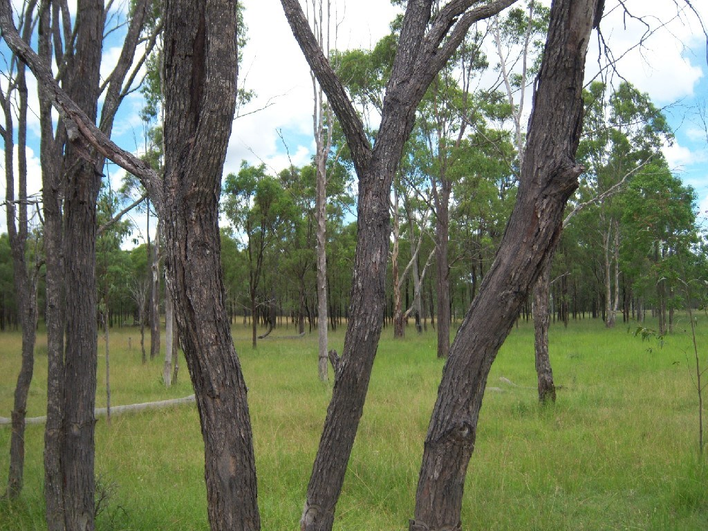 Property For Sale Off Mount Woowoonga Road, Via Biggenden Woowoonga QLD 4621 5