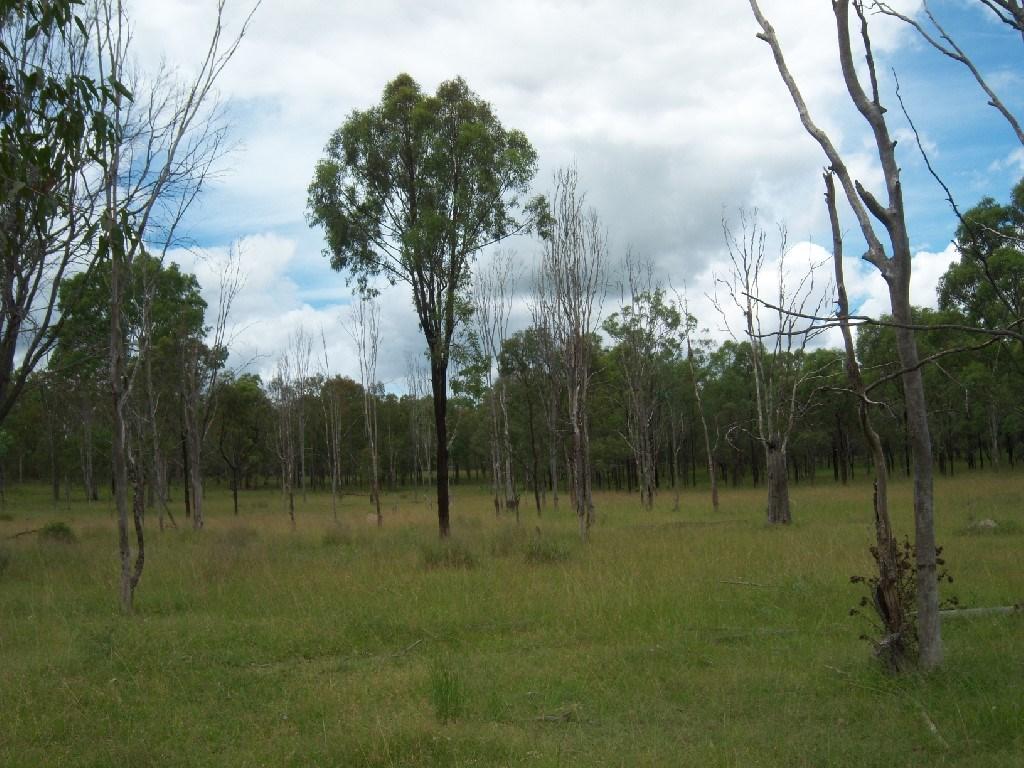 Property For Sale Off Mount Woowoonga Road, Via Biggenden Woowoonga QLD 4621 6