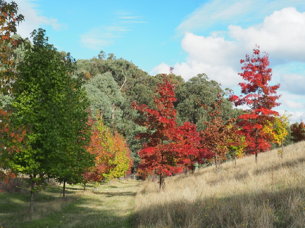 Property For Sale 142 Red Hill Road Beechworth VIC 3747 5