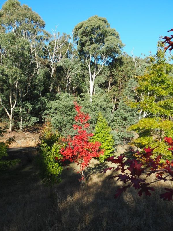 Property For Sale 142 Red Hill Road Beechworth VIC 3747 6
