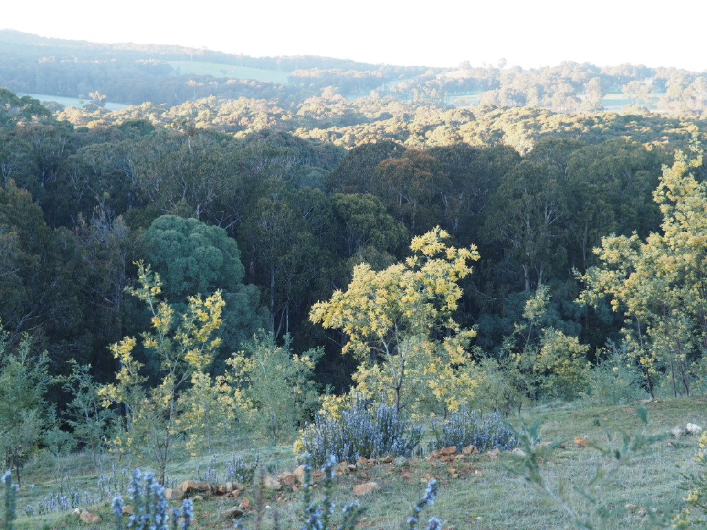 Property For Sale 142 Red Hill Road Beechworth VIC 3747 12