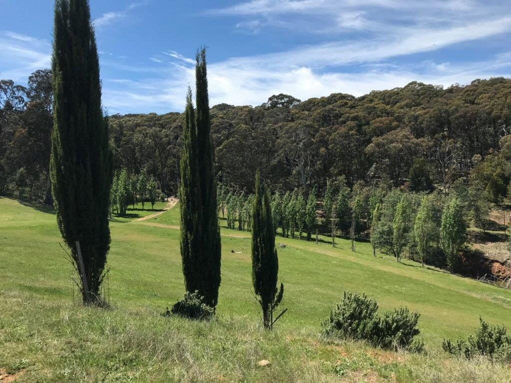 Property For Sale 142 Red Hill Road Beechworth VIC 3747 13