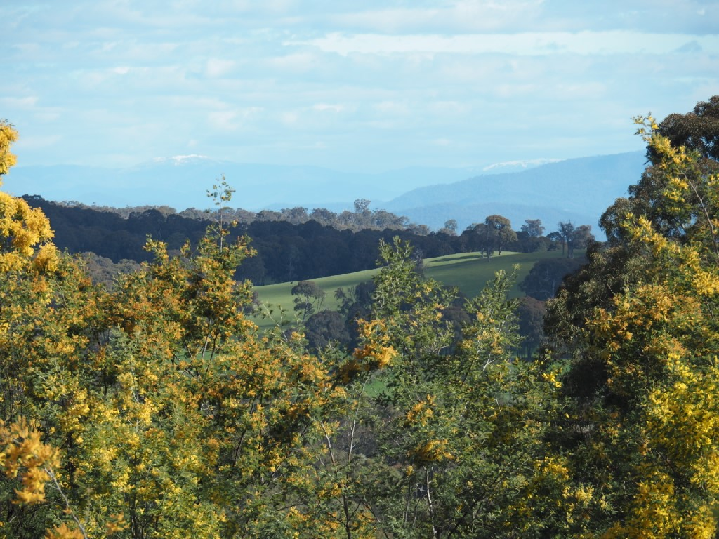 Property For Sale 142 Red Hill Road Beechworth VIC 3747 16