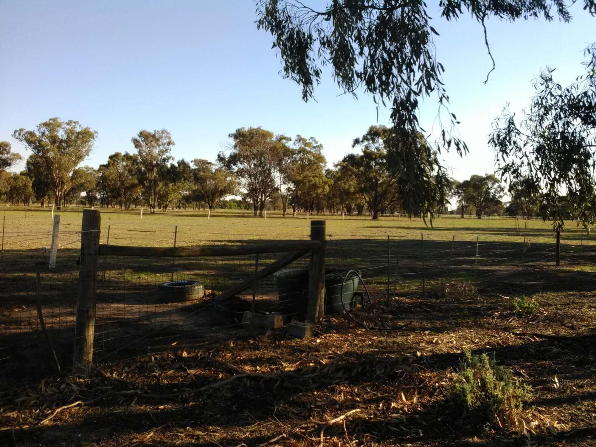 Property For Sale 176 Cobram Road Berrigan NSW 2712 4