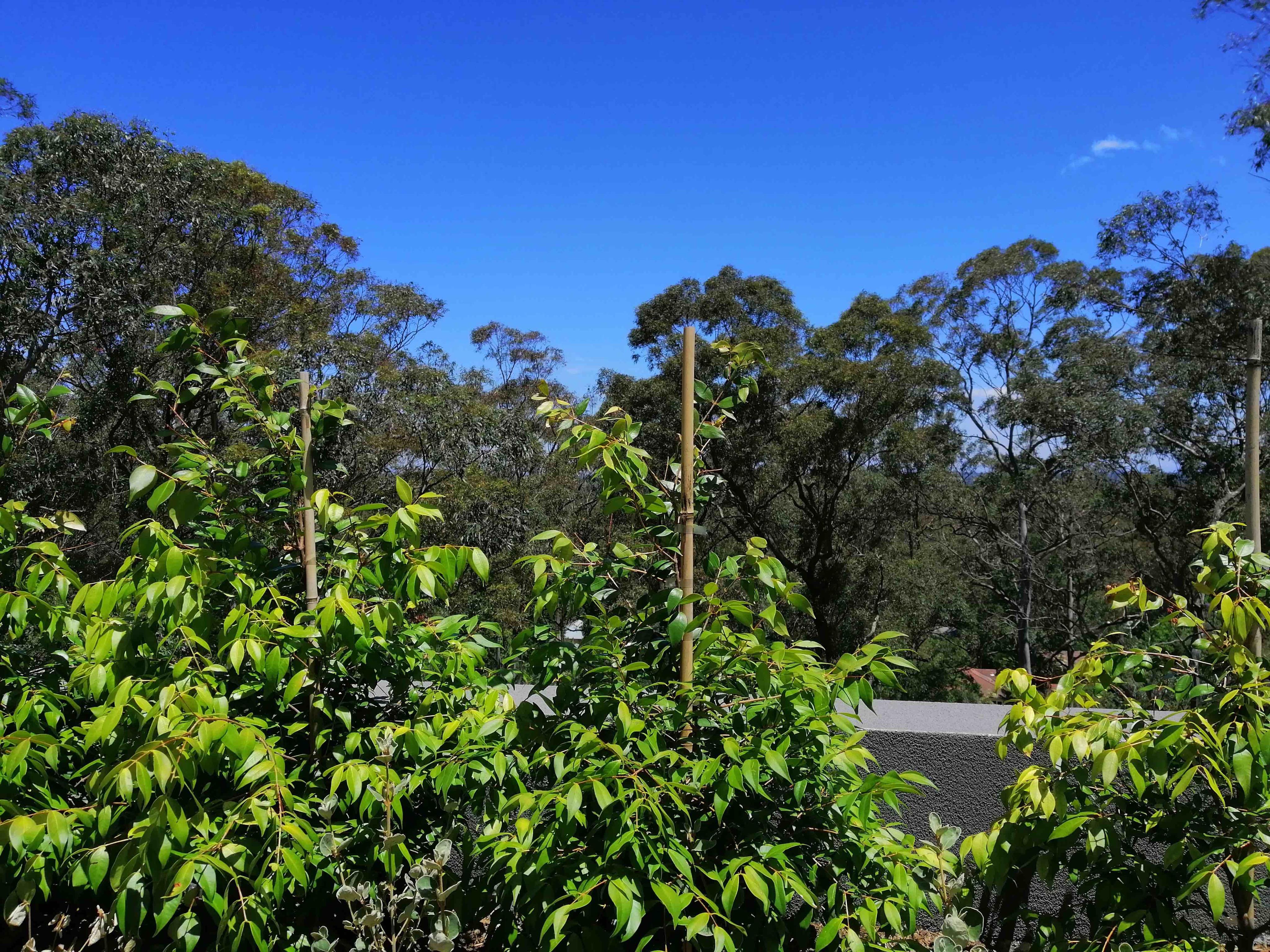 Turramurra 2074 NSW