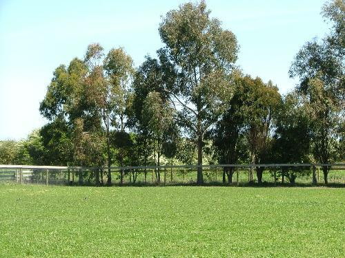 Property For Sale Warrnambool 3280 VIC 3