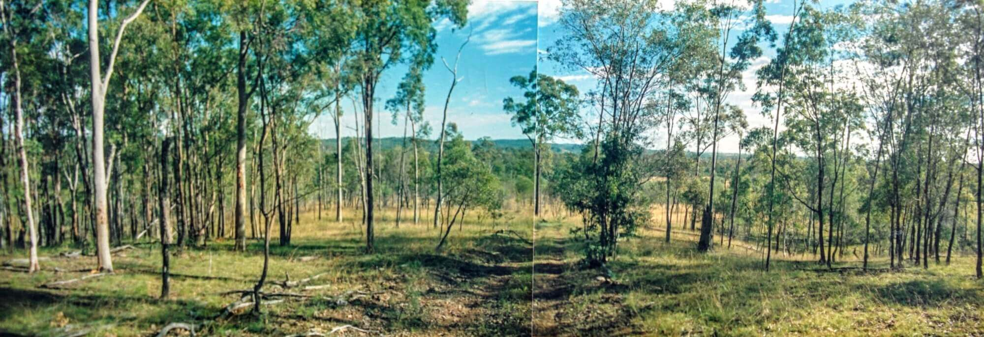 Property For Sale Horse Camp 4671 QLD 5