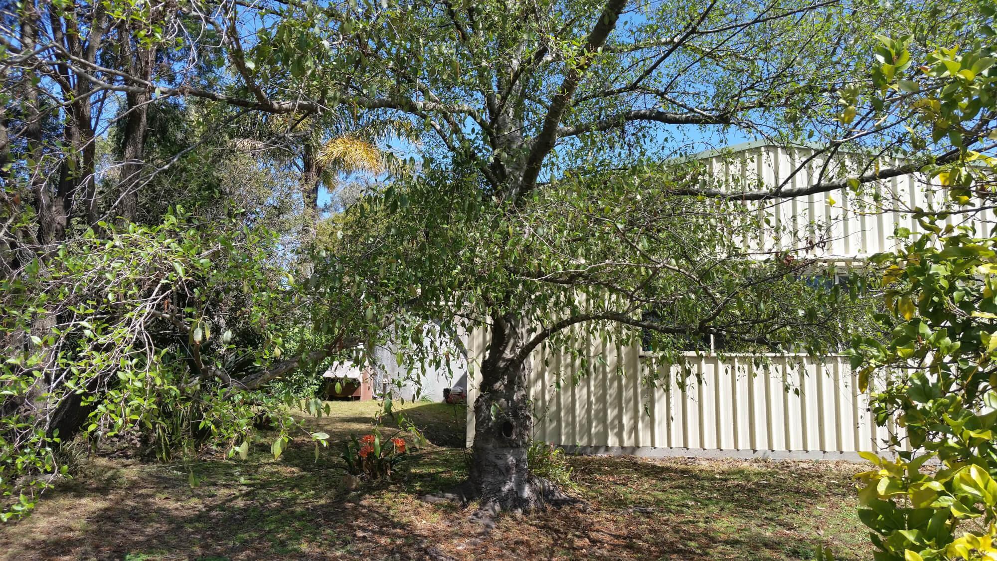 Property For Sale 533 Burragate Road Burragate NSW 2550 10