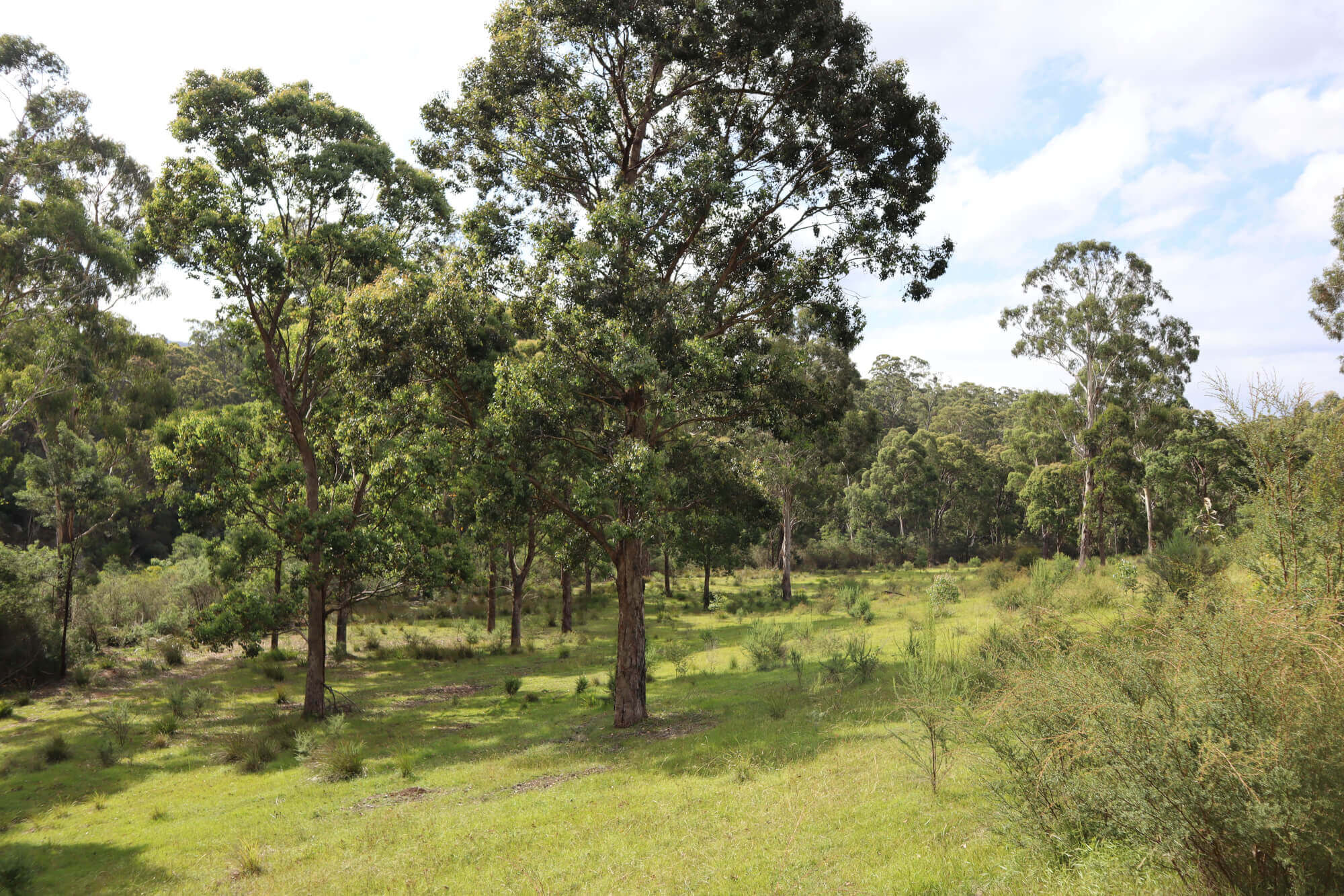 Property For Sold 533 Burragate Road Burragate NSW 2550 29