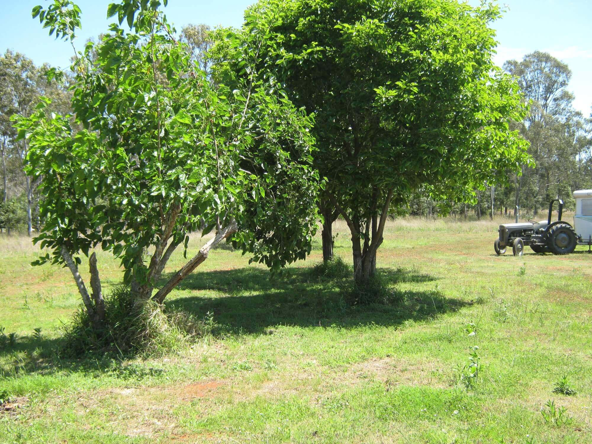 Property For Sale 75 The Heights road Glan Devon QLD 4615 2