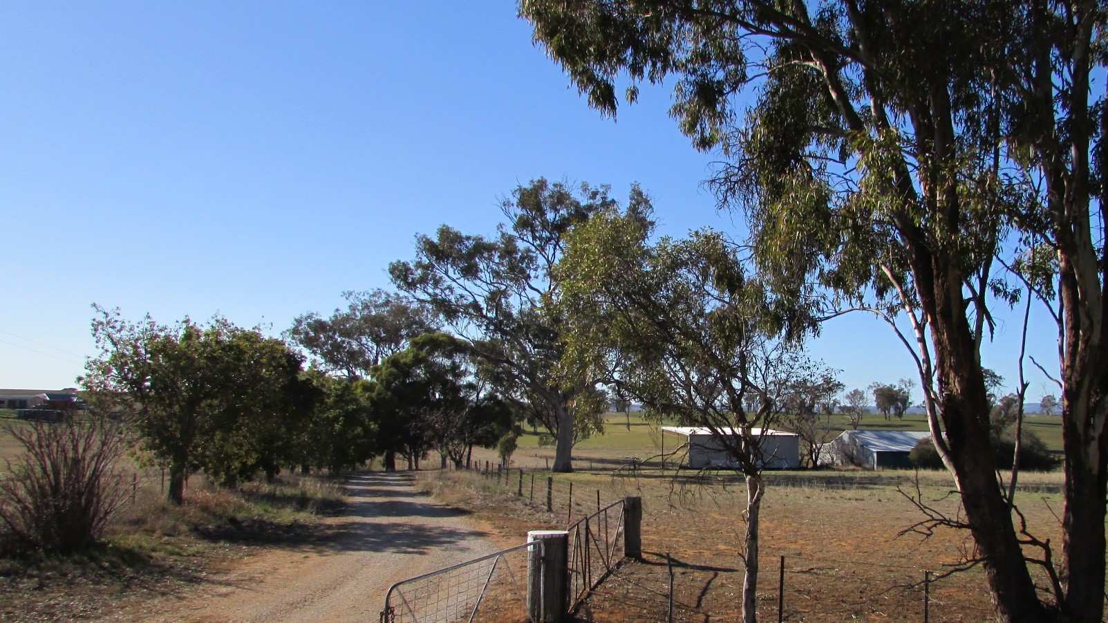Private Commercial For Sale 606 Peabody Road Molong NSW 2866