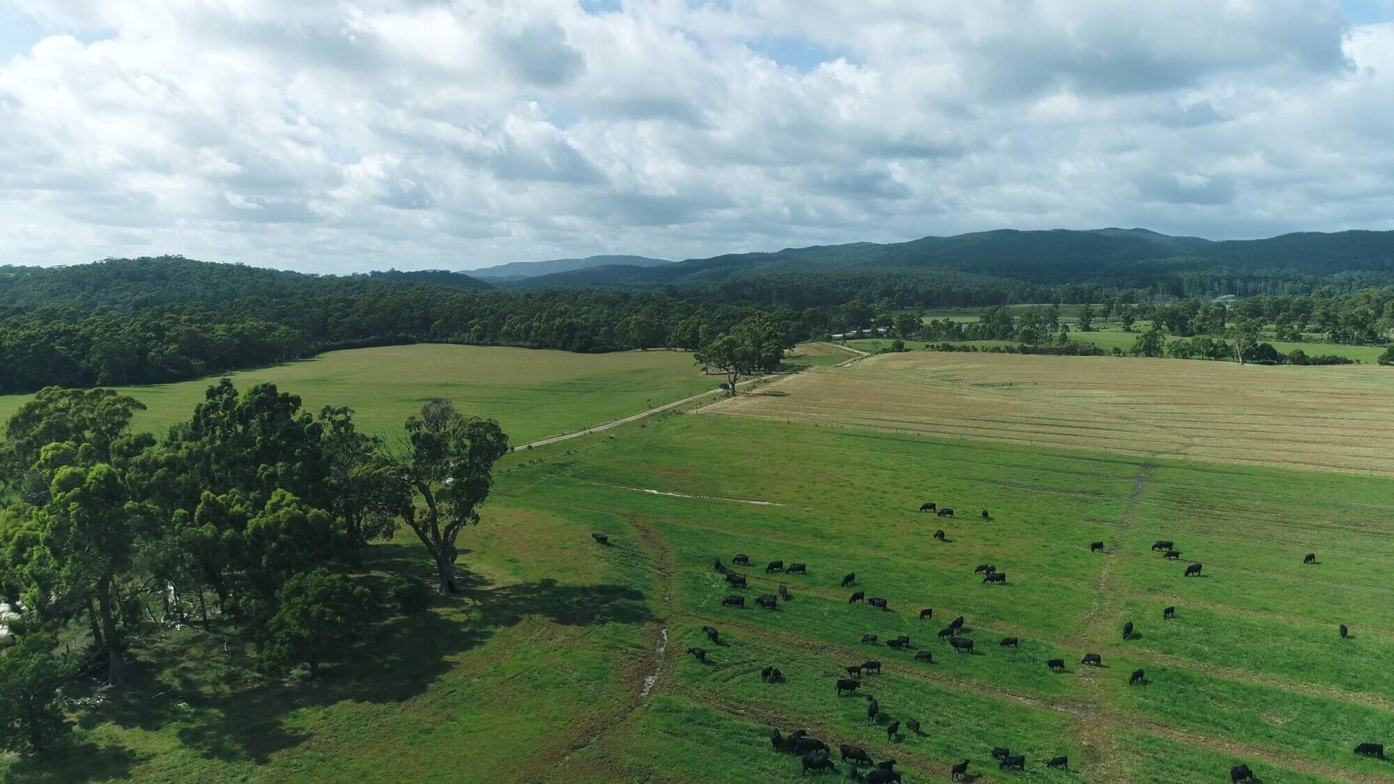 Property For Sale 300 Coopers road Rocky Cape TAS 7321 6
