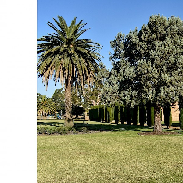 Property For Rent 151-155 Murray street Finley NSW 2713 16