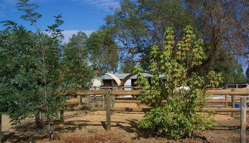 Property For Sale Kyabram 3620 VIC 6