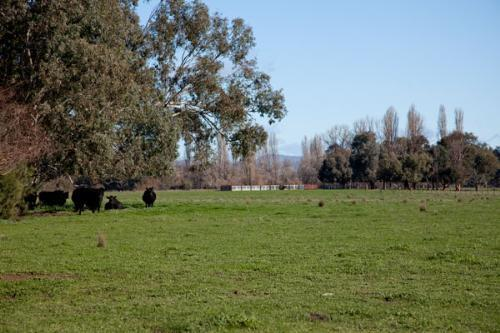 Property For Sold Corryong 3707 VIC 4