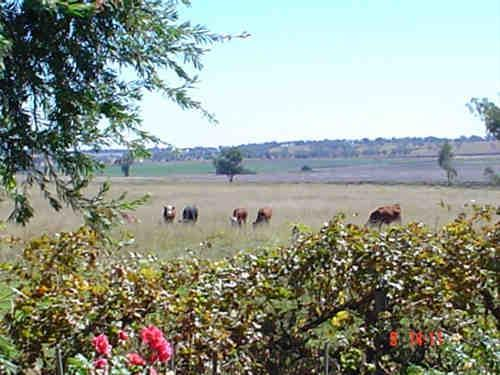 Property For Sale Delungra 2403 NSW 2