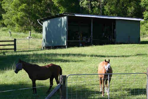 Property For Sale Kyogle 2474 NSW 6
