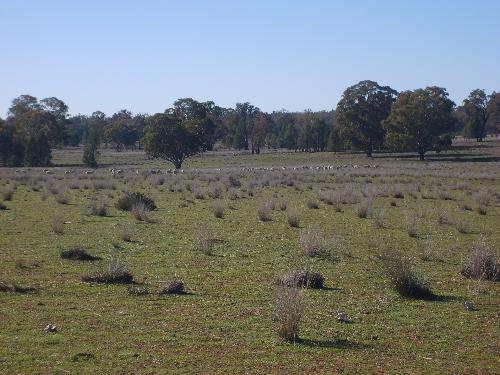 Property For Sold Mendooran 2842 NSW 7